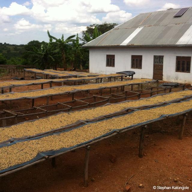 Farm Katongole